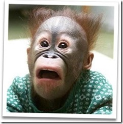 scared-monkey